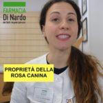 Rosa canina per prevenire i malanni di stagione